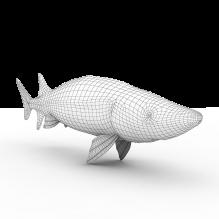 中华鲟-动物-鱼_水产-CG模型-3D城