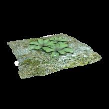 小草-植物-灌木-CG模型-3D城