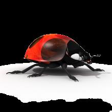 瓢虫-动物-昆虫-CG模型-3D城