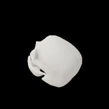 骷髅头-人物_角色-医学解剖-CG模型-3D城