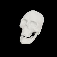 骷髅头-人物&角色-医学解剖-CG模型-3D城