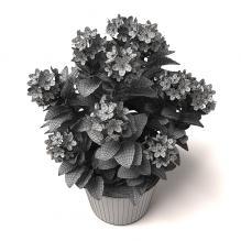 室内植物-植物-盆栽-CG模型-3D城