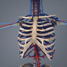 男人体解剖_VRay-人物_角色-医学解剖-CG模型-3D城