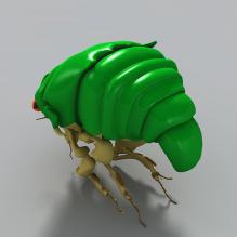 昆虫-动物-昆虫-CG模型-3D城