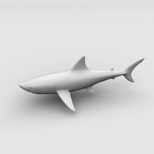 White Shark-动物-哺乳动物-CG模型-3D城
