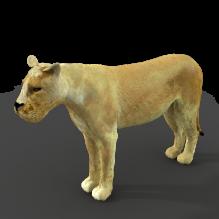 狮子-动物-哺乳动物-CG模型-3D城
