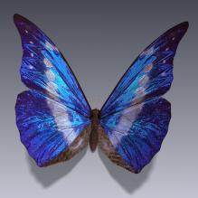 蝴蝶-动物-CG模型-3D城