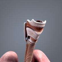 男人体解剖_呼吸系统-人物&角色-医学解剖-CG模型-3D城