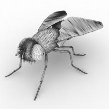 苍蝇-动物-昆虫-CG模型-3D城