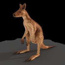 Kangaroo-动物-哺乳动物-CG模型-3D城