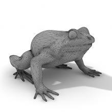 蟾蜍-动物-其它-CG模型-3D城