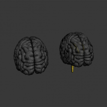 男人体解剖_神经系统_大脑-人物&角色-医学解剖-CG模型-3D城