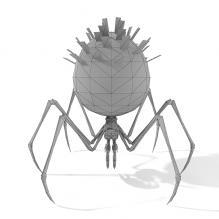 蜘蛛-动物-昆虫-CG模型-3D城