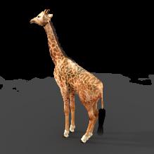 长颈鹿-动物-哺乳动物-CG模型-3D城