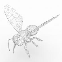 蜜蜂-动物-昆虫-CG模型-3D城