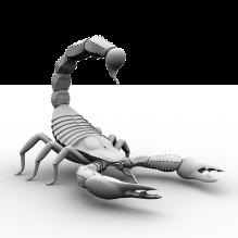 蝎子-动物-其它-CG模型-3D城