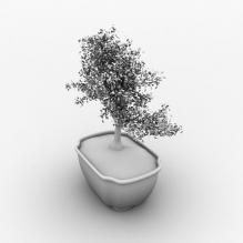 盆景-植物-盆栽-CG模型-3D城