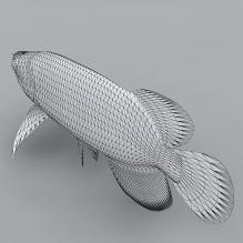 金龙鱼-动物-鱼_水产-CG模型-3D城