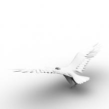 鸟类-动物-鸟类-CG模型-3D城