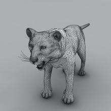 老虎-动物-哺乳动物-CG模型-3D城