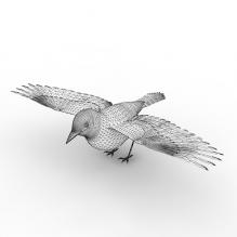 灰鸽子-动物-鸟类-CG模型-3D城