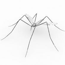 蚊-动物-昆虫-CG模型-3D城