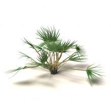 树-植物-灌木-CG模型-3D城