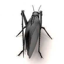 蚱蜢-动物-昆虫-CG模型-3D城