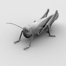 飞蝗-动物-昆虫-CG模型-3D城