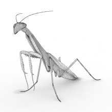 Praying Mantis-动物-昆虫-CG模型-3D城