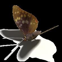 蝴蝶-动物-昆虫-CG模型-3D城