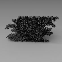 园艺植物-植物-灌木-CG模型-3D城