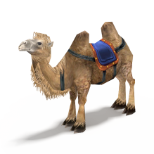骆驼-动物-哺乳动物-CG模型-3D城