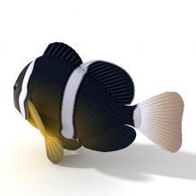 珊瑚鱼-动物-鱼_水产-CG模型-3D城