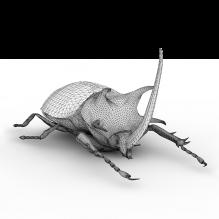 天牛-动物-昆虫-CG模型-3D城