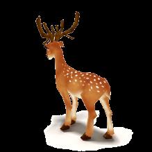 鹿-动物-哺乳动物-CG模型-3D城