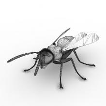虎头蜂昆虫-动物-昆虫-CG模型-3D城