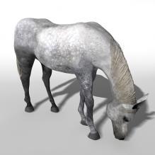 马-动物-哺乳动物-CG模型-3D城