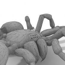蜘蛛-动物-其它-CG模型-3D城