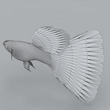 凤尾鱼-动物-鱼_水产-CG模型-3D城