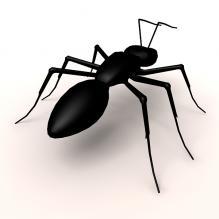 黑蚂蚁-动物-昆虫-CG模型-3D城