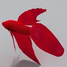 天使鱼-动物-鱼_水产-CG模型-3D城