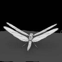 蜻蜓-动物-昆虫-CG模型-3D城