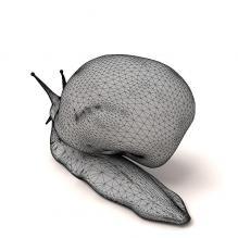 蜗牛-动物-其它-CG模型-3D城