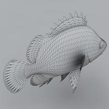鱼-动物-鱼_水产-CG模型-3D城