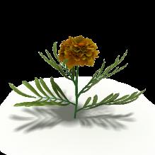 花-植物-花_草-CG模型-3D城